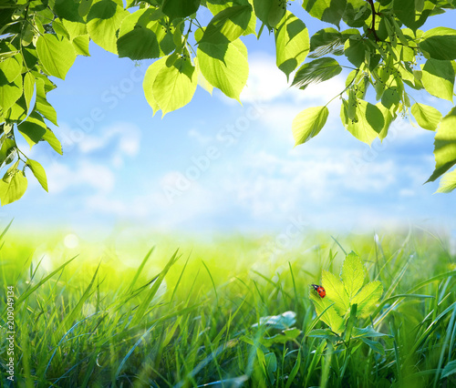 Natural green defocused background with sunshine Wallpaper Mural