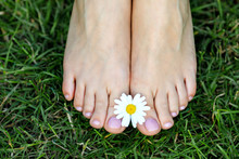 Bare Feet With Daisy On Green Grass