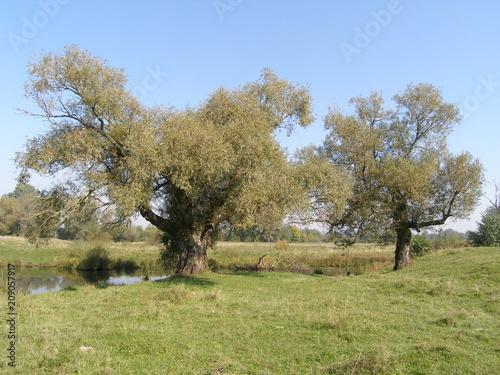 Foto auf Gartenposter Reisfelder Landscape with old trees