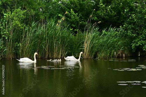 Fototapeta premium Landschaft 600