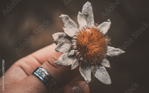 Photo  Hand holding dead flower with vintage tumblr light