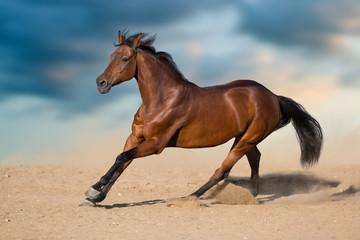 Bay stallion with long mane run in desert dust against sky