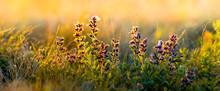 Wild Flowers And Grass Closeup...