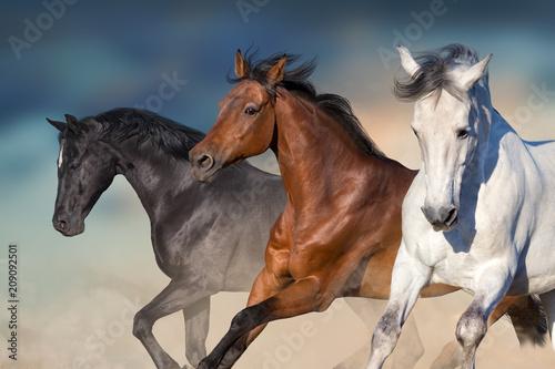 Fototapeta Horses run gallop in desert against sky obraz