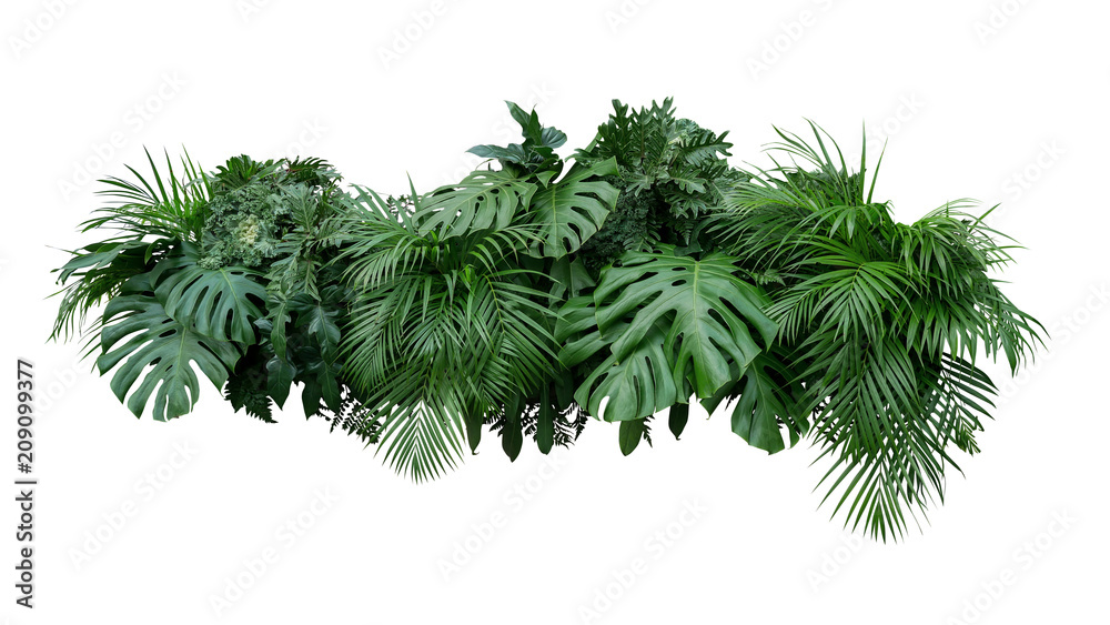 Fototapety, obrazy: Tropical leaves foliage plant bush floral arrangement nature backdrop isolated on white background, clipping path included.