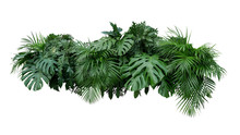 Tropical Leaves Foliage Plant ...