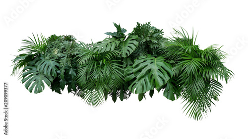 Fotoposter Planten Tropical leaves foliage plant bush floral arrangement nature backdrop isolated on white background, clipping path included.
