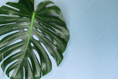 Canvas Prints Floral Fashion background with Monstera leaf