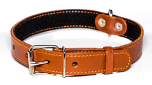 Leather Dog-collar Isolated O...