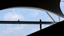 Silhouette Of A Pigeon On Steel Structure At The Factory