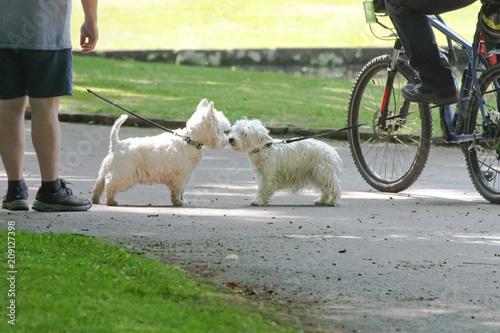 Photo  Hunde beim Spaziergang im Park