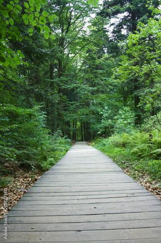 Tuinposter Weg in bos Ścieżka przez las wyłożona drewnianymi deskami, puszcza jodłowa, Góry Świętokrzyskie, wejście na Łysicę