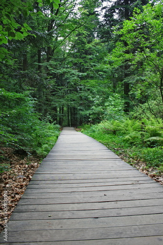 Foto op Canvas Weg in bos Path through a forest lined with planks, fir forest, Świętokrzyskie Mountains