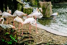 White Flamingo Seen In Bird Park In Kuala Lumpur