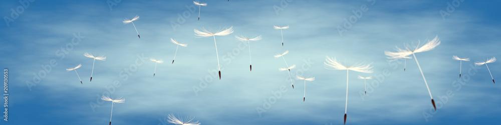 Fototapety, obrazy: löwenzahnsamen vor blauem Himmel