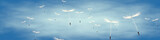 Fototapeta Dmuchawce - löwenzahnsamen vor blauem Himmel