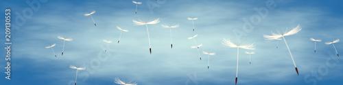 Deurstickers Paardenbloem löwenzahnsamen vor blauem Himmel