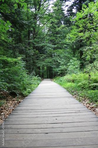 Staande foto Weg in bos Ścieżka przez las wyłożona drewnianymi deskami, puszcza jodłowa, Góry Świętokrzyskie, zielone tło