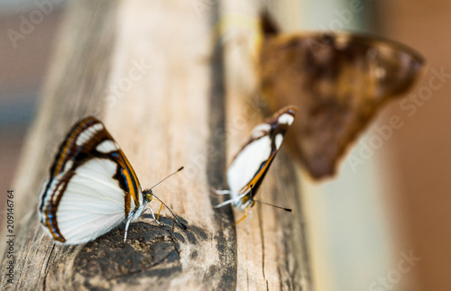 Fotobehang Macrofotografie Close up macro photography of colorful butterflies sitting on wood together