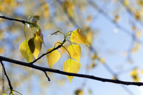 Papiers peints Arbre beautiful foliage