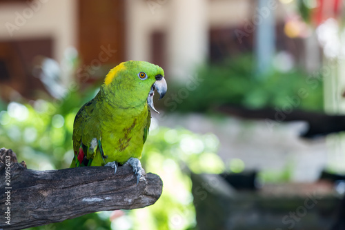 Staande foto Papegaai Parrot, lovely bird, animal and pet in the garden