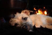 Warm Boy