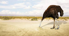 Illustration Of An Ostrich Hid...