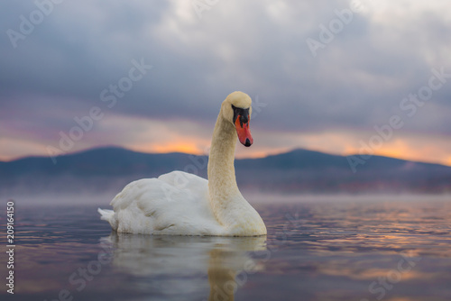 Tuinposter Zwaan White Swan at Lake Yamanaka with Mt. Fuji background