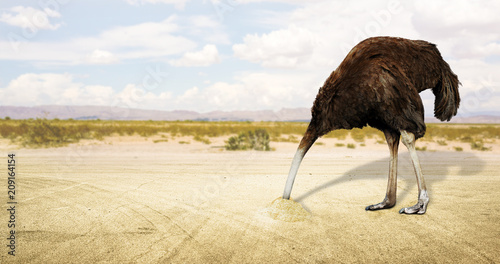 Fotografía Illustration of an ostrich hiding his head in the sand in the desert