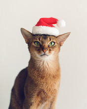 Adorable Cat In Christmas Hat