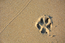 Dog Single Paw Print On Beach Sand, Copy Space