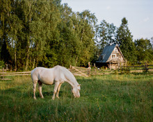 Horse Pasturing In Countryside