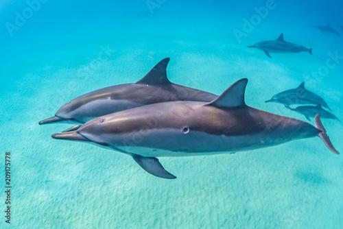 In de dag Dolfijn Dolphin Pod