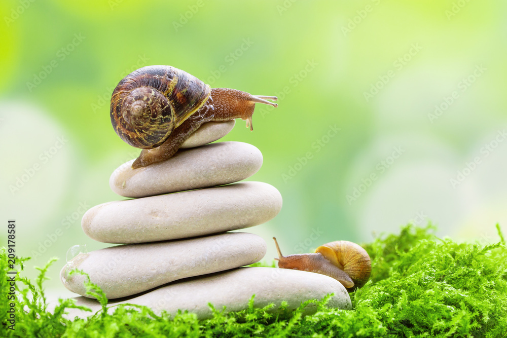Fototapety, obrazy: A snail on the top of a pile of pebbles encourages its partner.