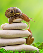 A Snail On The Top Of A Pile Of Pebbles Encourages Its Partner.