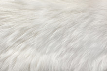 White Natural Fur Background
