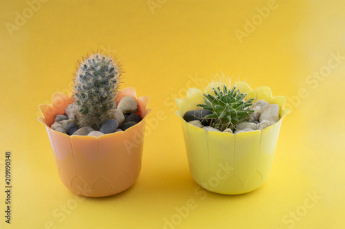Foto op Plexiglas Cactus Front view Green Cactus concept on yellow background with copy space. Aloe and other succulents in colorful ceramic pot.