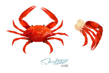 Crab And Meat Crab Vector Illu...