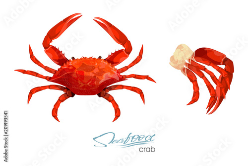 Photo Crab and meat crab vector illustration in cartoon style isolated on white background