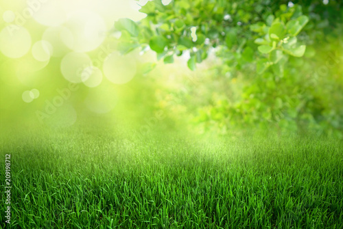 Obraz Natural green defocused spring summer blurred background with sunshine. Juicy young grass and foliage on nature in rays of sunlight, copy space. - fototapety do salonu