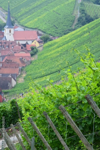Poster Lime groen Vineyard with Village idyll