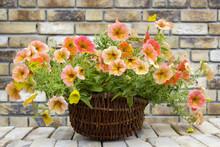 Basket With Petunias (Petunia Hybrida) Flowers