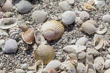 Beach Sea Shells