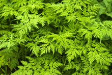 Floral Background - Green Leav...