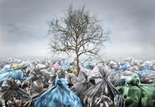Pollution Concept. Dead Tree I...