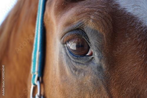 Canvas Prints Horses Eye of a horse