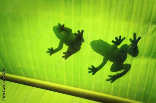 Fotografia, Obraz  The silhouette of the animal on the leaf.