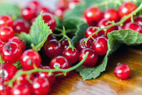 Cadres-photo bureau Fruits Red currant berries on leaves