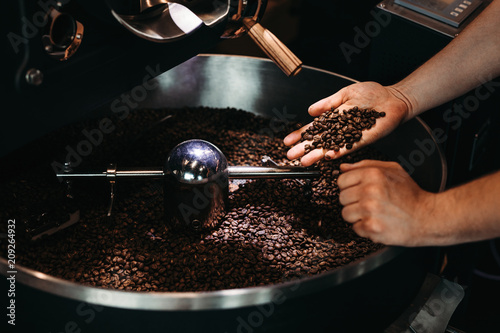 Hands of a men holding a fresh roasted bean above a metal drum full of coffee beans