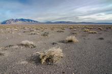 Salt Desert Scrub